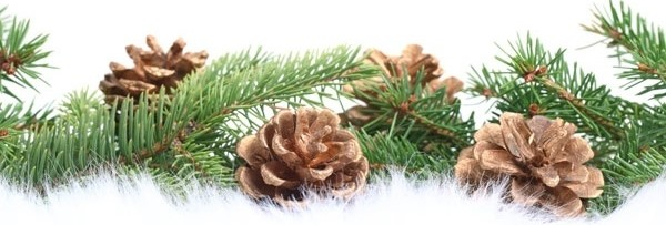 Evergreen Branches and Pine Cones